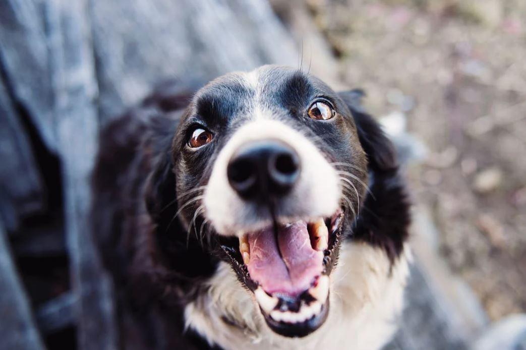 Jeder Hundebesitzer freut sich über ein Hundekissen waschbar